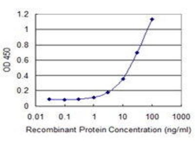 Mouse Anti-MSRB2 Antibody