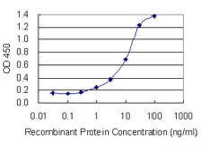 Mouse Anti-NPHS1 Antibody
