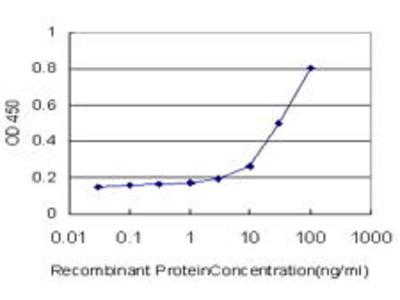 Mouse Anti-TAZ Antibody