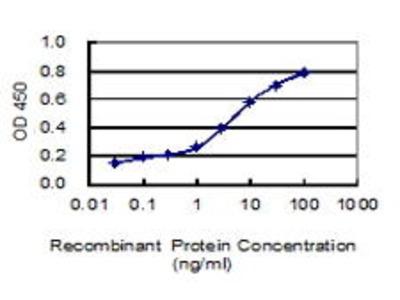 Mouse Anti-PRICKLE1 Antibody