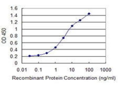 Mouse Anti-CYP26B1 Antibody