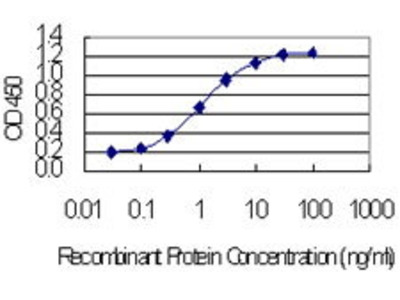 Mouse Anti-CCDC12 Antibody