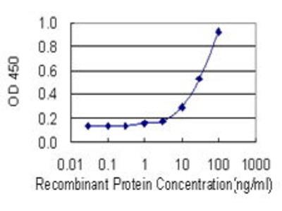 Mouse Anti-ADH5 Antibody