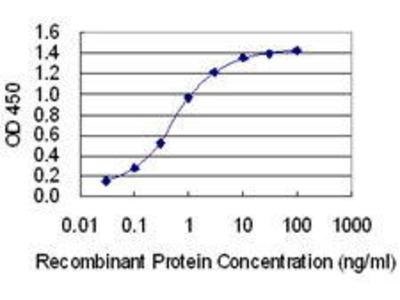 Mouse Anti-TOPBP1 Antibody