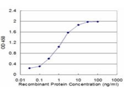 Mouse Anti-COX17 Antibody
