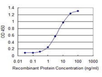 Mouse Anti-CDY2A Antibody