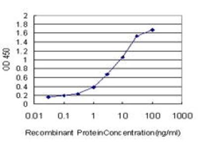 Mouse Anti-BRAF Antibody