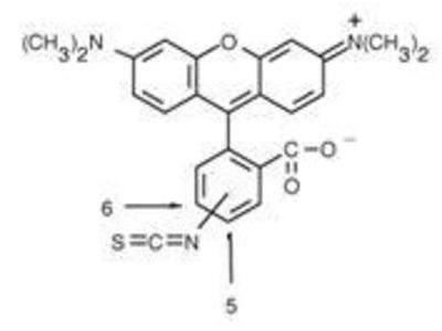 Rhodamine Antibody