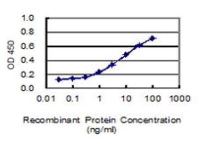 Mouse Anti-CHL1 Antibody