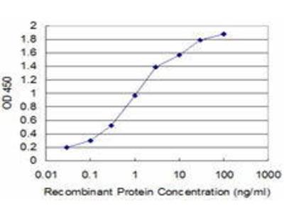 Mouse Anti-SLC11A2 Antibody
