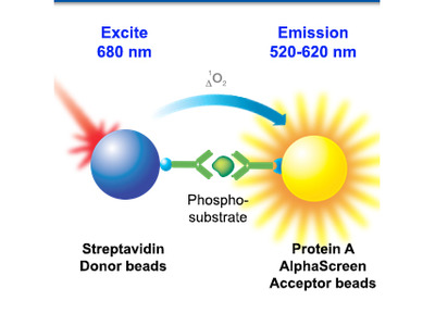 AlphaScreen SureFire Phospho-cofilin (Ser3) Assay Kit - 50,000 Points
