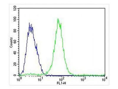 CCL15 antibody