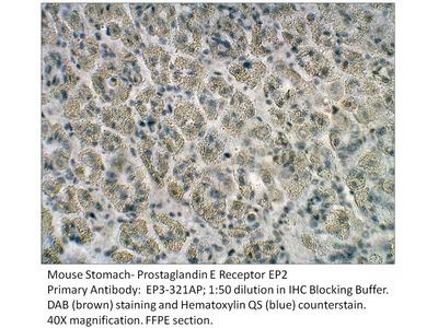 Prostaglandin E Receptor EP2 Antibody