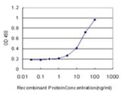 Heparanase / HPSE Antibody (4D7)