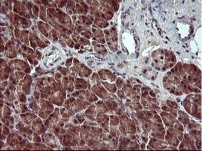Placental Lactogen / CSH1 Antibody (OTI2G4)