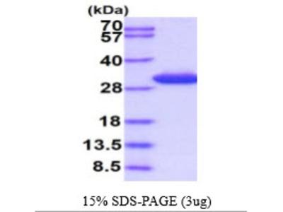 SPR Protein