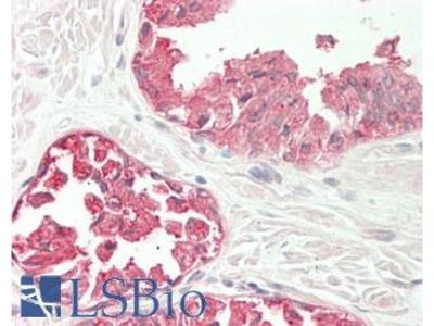 LENG8 Polyclonal Antibody