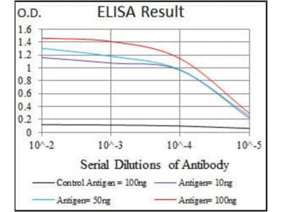 iNOS antibody