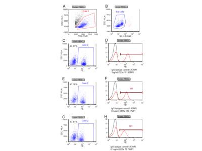 CD3 epsilon antibody