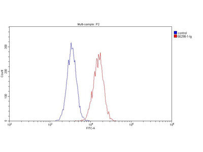 Anti-CD19 Antibody Products | Biocompare com