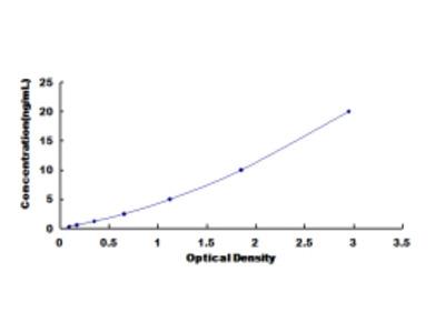 Protein Tyrosine Phosphatase, Non Receptor Type 11 (PTPN11) ELISA Kit