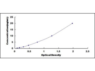 D Site Of Albumin Promoter Binding Protein (DBP) ELISA Kit