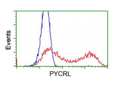 PYCRL antibody