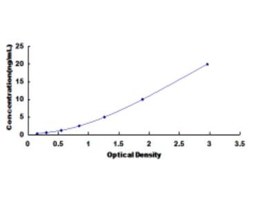 Arylsulfatase F (ARSF) ELISA Kit