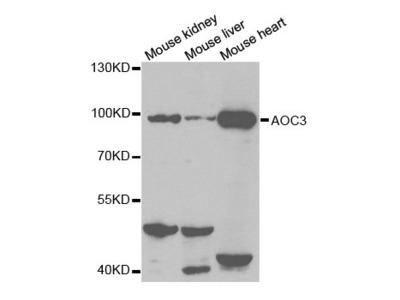 AOC3 Antibody