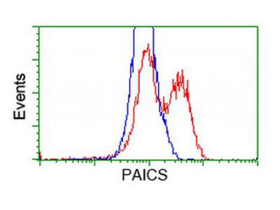 PAICS antibody