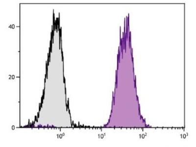 H-2Dd Antibody (34-5-8S)