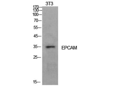 EP-CAM Polyclonal Antibody