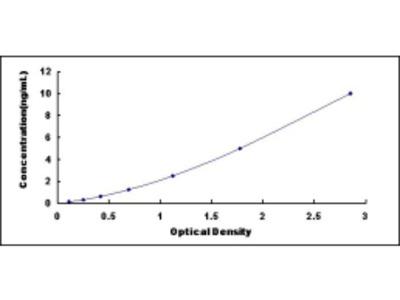 Calcium/Calmodulin Dependent Protein Kinase II Alpha (CAMK2a) ELISA Kit