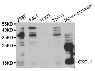 CXCL1 Antibody