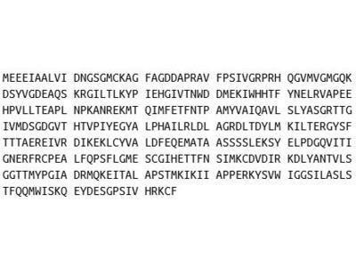 Recombinant Actin Gamma 1 (ACTg1)