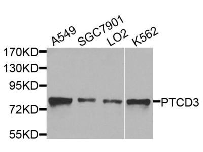 PTCD3 Polyclonal Antibody