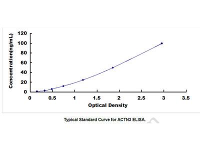 Actinin Alpha 3 (ACTN3) ELISA Kit