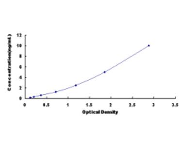 BMP And Activin Membrane Bound Inhibitor Homolog (BAMBI) ELISA Kit