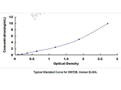 Wingless Type MMTV Integration Site Family, Member 2B (WNT2B) ELISA Kit
