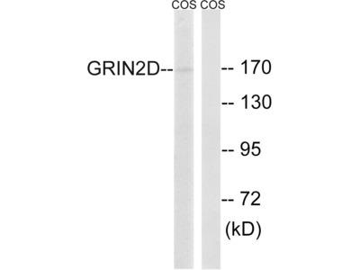 NMDAR2D Polyclonal Antibody