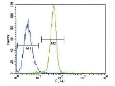 Leptin Receptor Antibody (LEPR)
