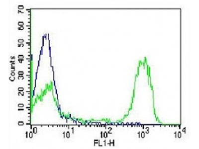 CD3 Antibody (Mouse Monoclonal)