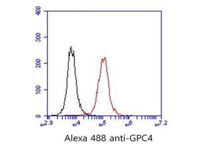 anti Glypican-4 (GPC4)