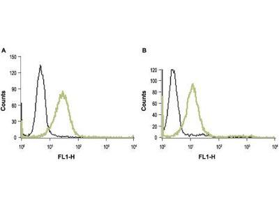 Anti-Thrombin Receptor antibody