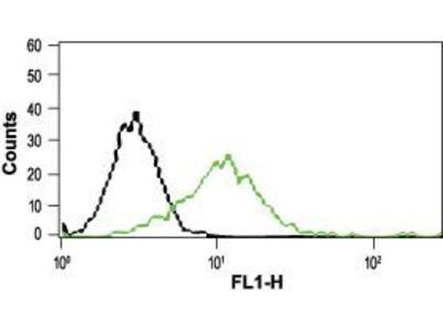 Anti-VRL1 antibody