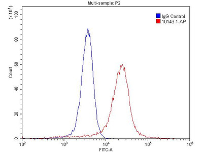 Cytokeratin 14 antibody