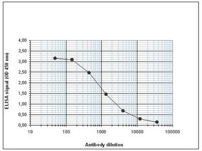 Rabbit Polyclonal ETO Antibody