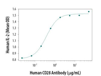 DNA-PKcs Antibody