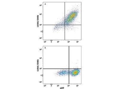 LILRA6 / CD85b Antibody