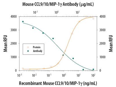 CCL9 /10 /MIP-1 gamma Antibody